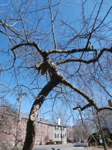 bare-branches-in-april