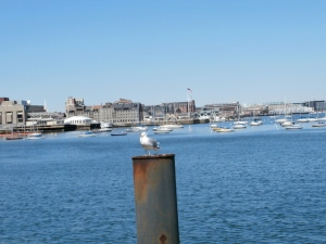 gull-boston-harbor