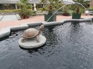 tower-hill-tortoise