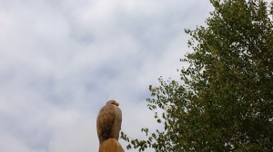hawk-carved-from-dead-tree