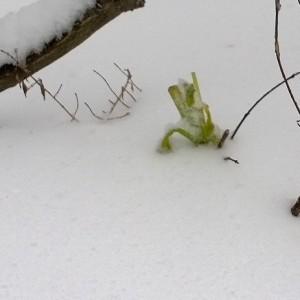 121413-celery-for-bunny