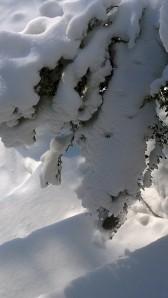 021614-sun-on-snow