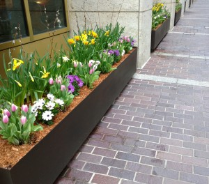 Congress-St-flower-boxes