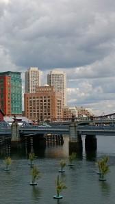 palm-trees-visit-Boston