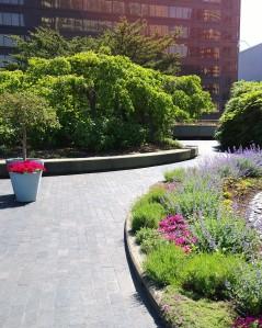 flowering-4th-floor-roof