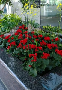 flowers-in-lobby