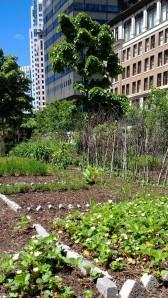 urban-greenway-grows-strawberries