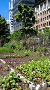 urban-greenway-grows-strawberries