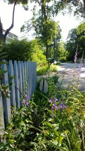 062914-flowering-weeds