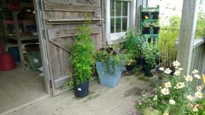 garden-supply-store