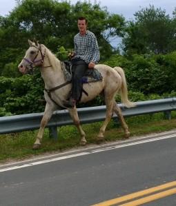 horse-on-Lakeside