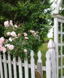 roses-july4-2014