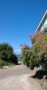 fluffy-bush-by-the-sea
