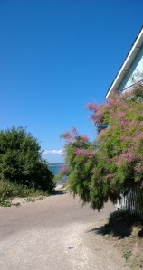 fluffy-bush-by-the-sea