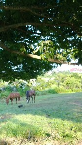 two-horses-early-morning
