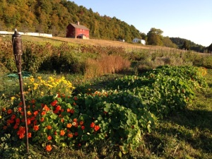 092714-Letterbox-Farm-garden