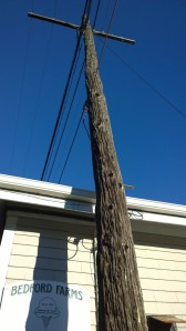 utility-pole-that-is-a-tree