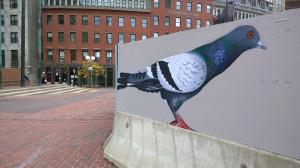 110714-a-pigeon-that-I-pass-alas
