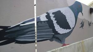 110714-peeking-thru-pigeons