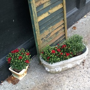 flower-pots-in-fall