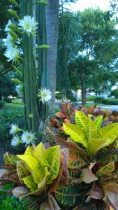 cactus-Florida