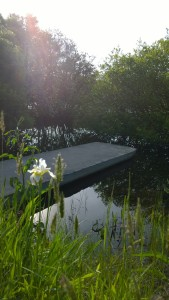 iris-in-sunlight