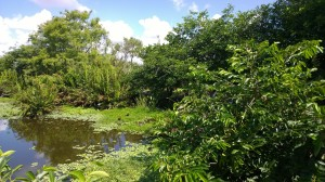 Wakodahatchee-wetlands
