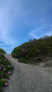 beach-entrywith-roses