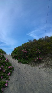 beach-entrywith-roses