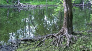 roots-hold-me-close