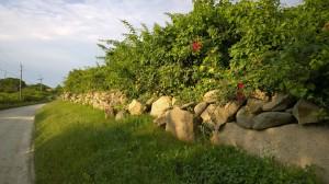 stone-wall-morning