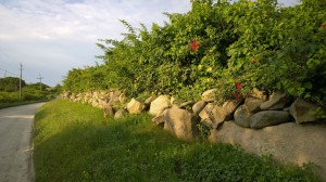 stone-wall-morning