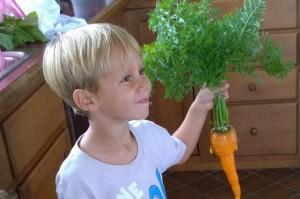 082315-one-big-carrot