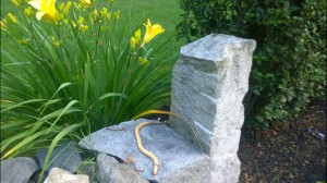 81915-fake-snake