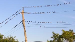 082915-written-in-the-birds