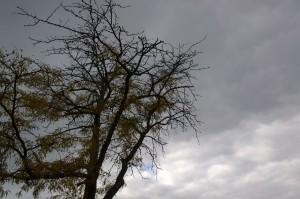 101815-fir-spooky-sky