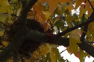 110715-empty-nest