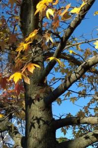 110815-leaf-shadow