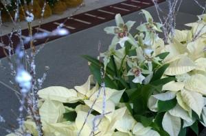 120315-lobby-flowers