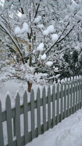 020516-dogwood-and-fence-in-snow