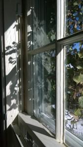 021316-ivy-shadows