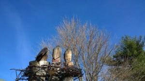 031216-carved-eagles-arlington