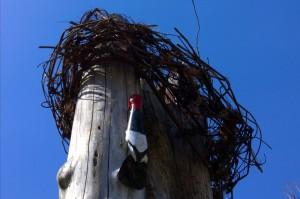 031216-carved-woodpecker-arlington