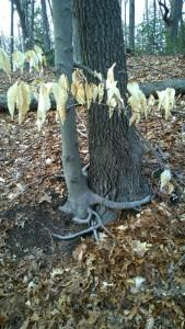 031616-treehugger-tree
