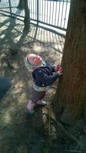 032716-squirrel-went-up-tree