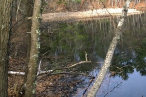 033116-pond-in-town-forest