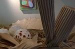 041516-art-nest-for-warbler