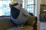 041516-warbler-in-sneakers