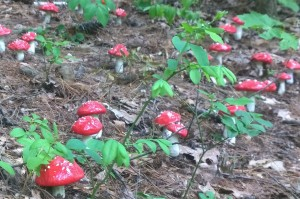 060316-toadstools-town-forest-art