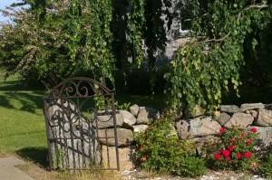 061116-stone-wall-roses